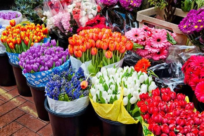 روز/افزایش قیمت گل در راه است/ نرخ مصوب هر شاخه گل رز ۱۵ هزار تومان