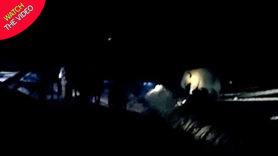 درگیری ساکنان محلی با گله فیل ها در هندوستان! + فیلم///