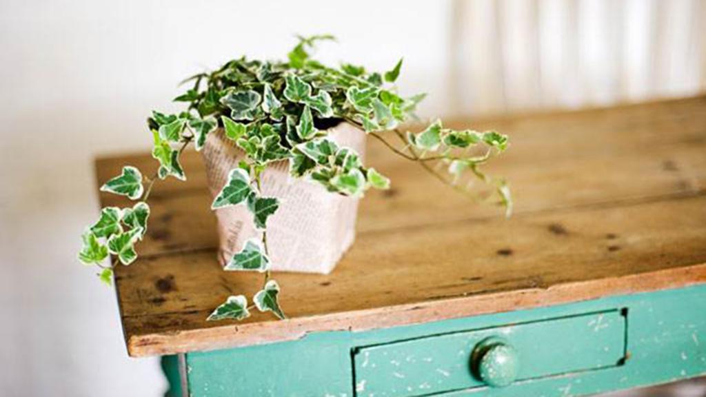 چکار کنیم تا گیاهان آپارتمانی پژمرده نشوند؟