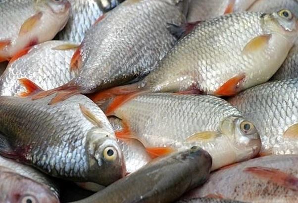 باشگاه خبرنگاران -قبل از خرید ماهی به چه نکاتی توجه کنیم؟
