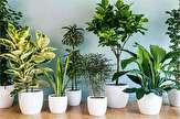 باشگاه خبرنگاران -چکار کنیم تا گیاهان آپارتمانی پژمرده نشوند؟