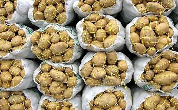 باشگاه خبرنگاران -محموله ۴۳ تنی سیب زمینی قاچاق در مرز کشف شد