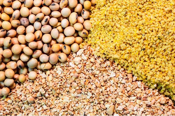 اختصاص ۱۰۰ هزار میلیارد تومان بودجه به واردات نهادههای دامی و گوشت