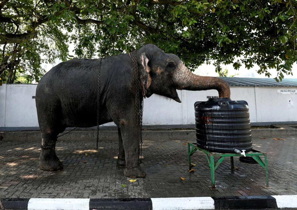 تصاویر روز: از خروج ۷ عضو حزب کارگر انگلیس از این حزب تا آب نوشیدن یک فیل در خیابانی در سریلانکا
