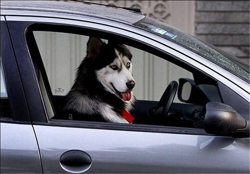 برخورد پلیس با سگ گردانان در محافل عمومی/ حمل سگ در خودور ممنوع است