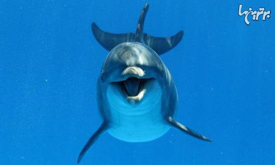 تواناییهای عجیب و شگفت انگیز حیوانات که انسانها از آن عاجزند! +تصاویر