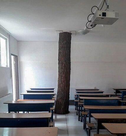 درخت کهنسالی که همپای دانش آموزان درس میخواند