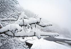 خودنمایی زمستان در اولین روز اسفند/بارش برف در اغلب نواحی گلستان
