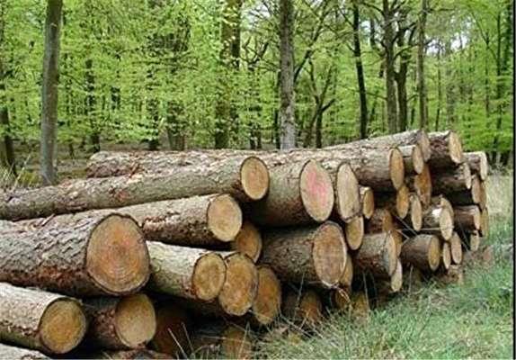 باشگاه خبرنگاران - قاچاق چوب، آفتی بر پیکرهی جنگلهای آذربایجان غربی