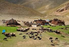 تولید ۵۰۰ میلیارد تومان محصولات دامی به صورت سالانه در استان ایلام