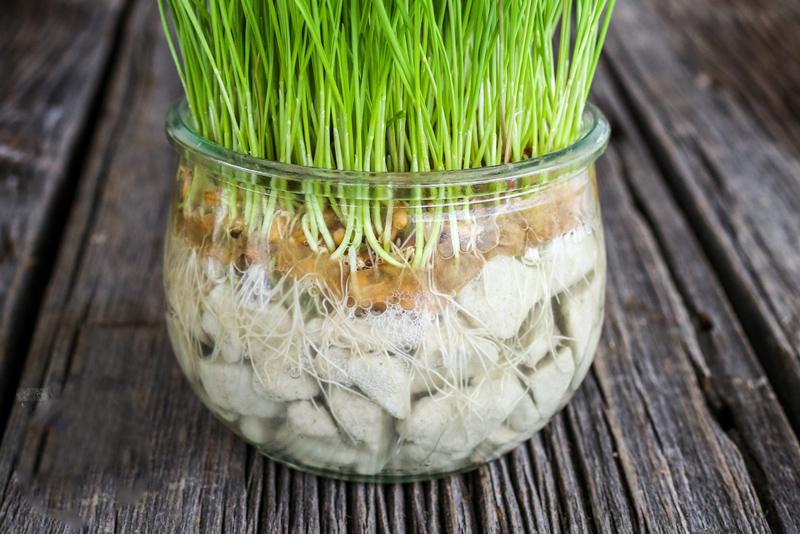 روش درست کردن سبزه عید در تنگ شیشهای