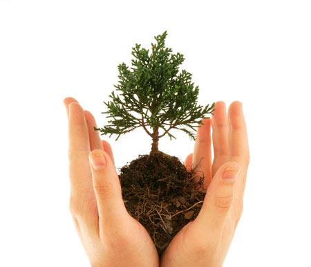 سرانه فضای سبز باید به حداقل ۱۵ متر مربع برسد/ پرهیز از توسعه و کاشت گیاهان و درختان آب بر