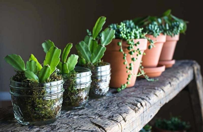 گلها و سبزیجاتی که تنها با یک لیوان آب میتوانید پرورش دهید
