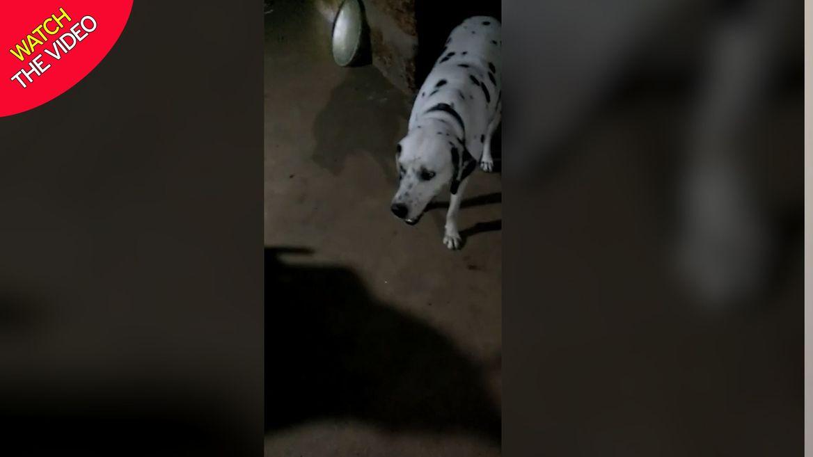 نجات جان یک خانواده توسط سگ وفادار! + فیلم و عکس