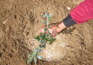 جشن روز درختکاری همزمان با هفته منابع طبیعی