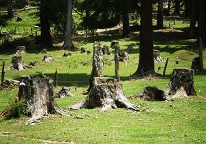 ماجرای تخلفاتی که کمر درختان اهواز را شکاند تا فارس میزبان گردشگران نوروزی+ فیلم