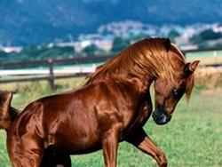 برگزاری نخستین همایش زیبایی اسب در اسدآباد