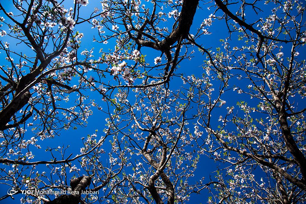 حافظ برای بهار چه اشعاری سروده است؟
