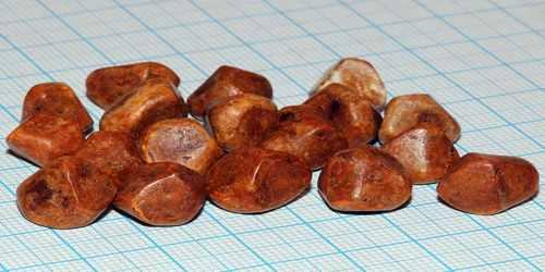 دفع سنگ کیسه صفرا با «جوانه تخم چغندر و لبو»/ با این جوانه از بیماریهای قارچی در امان بمانید