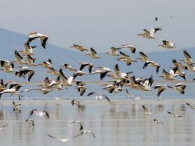کوچ حدود ۲۰۰ هزار پرنده از آبگیرها و تالابهای گیلان