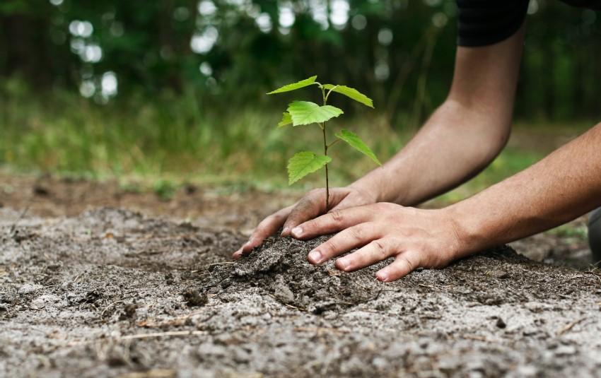 نهال کاری درختان مضر، آفتی بر جان محیط زیست + صوت
