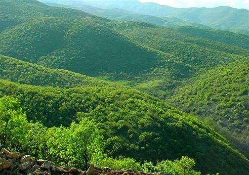 حافظان بی محافظ جنگل ها / پاسداری از پوشش گیاهی، وظیفه ملی