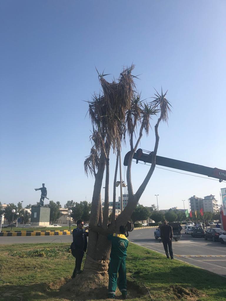 درختی که نبودش خبرساز شد
