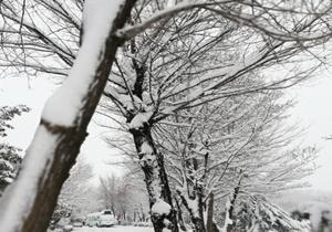 ۲۰ سانتیمتر برف در کوهرنگ به زمین نشست