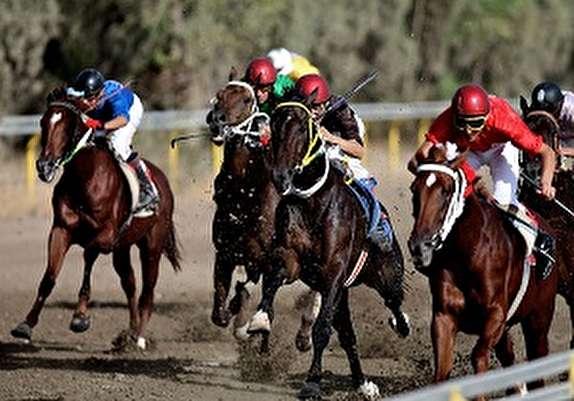 باشگاه خبرنگاران - درخشش سوارکاران لرستانی در مسابقات اسب دوانی استقامتی کشور
