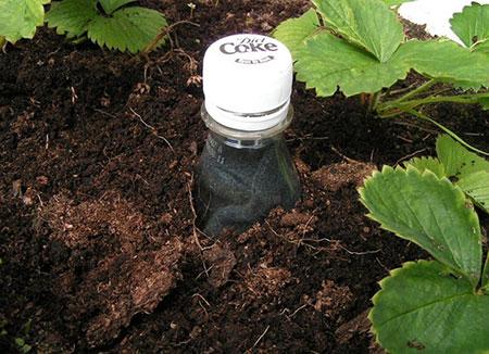 راهکارهایی برای آبیاری گیاهان خانگی هنگام سفر