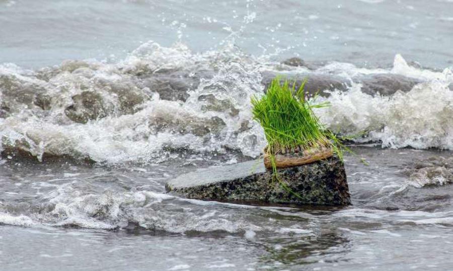 روزی که طبیعت چراغ سبز نشان میدهد/ سیزده به در آئین خوش و بش ایرانیها در طبیعت