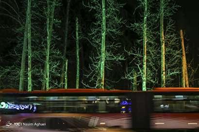مرگ تدریجی درختان خیابان ولیعصر (عج)