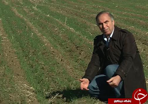 آبماندگی مشکل نیمی از زمینهای کشاورزی گلستان