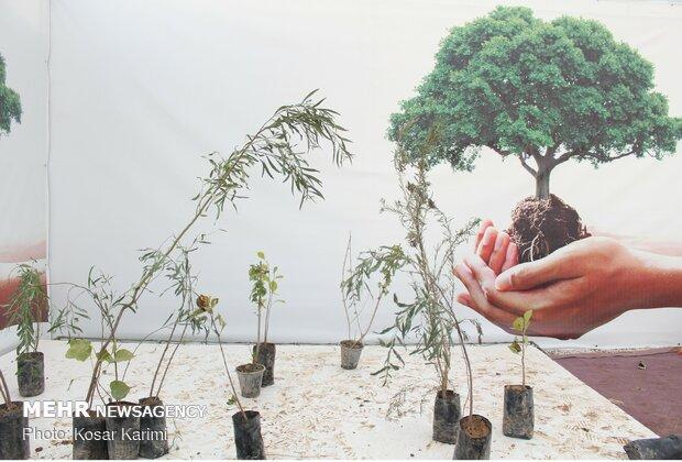 به جای درختکاری این کارها را انجام ندهید!