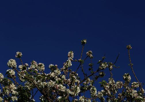 عیدنوروز و بهار در شعر شاعران گذشته تا امروز