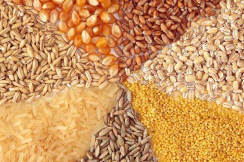 از احیای زمین های کشاورزی تا راه اندازی خط تولید نهاده های دامی