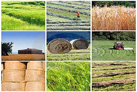 ۲  میلیون تن به ظرفیت فرآوری محصولات کشاورزی افزوده شد