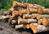 باشگاه خبرنگاران - کشف و ضبط ۲.۵ تن چوب قاچاق بلوط در پلدختر