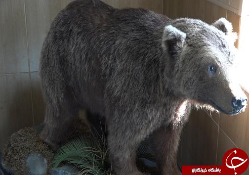 به شماره افتادن نفس گونههای جانوری در حال انقراض