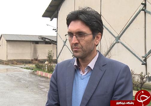بازگشت آرامش به بازار مرغ گلستان / التهاب کمبود مرغ در استان فروکش کرد