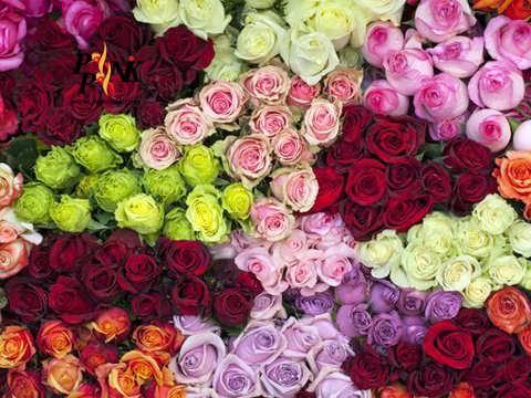 قیمت گل در آستانه روز مادر گران شد/ نرخ مصوب هر شاخه گل رز ۲۰ هزار تومان