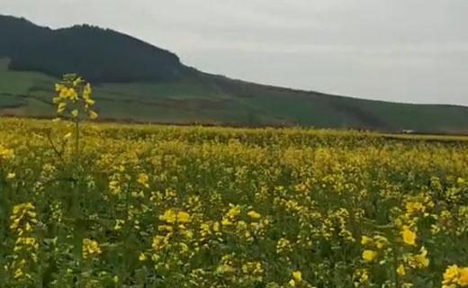 گوشهای از طبیعت بهاری در «آزادشهر» + فیلم