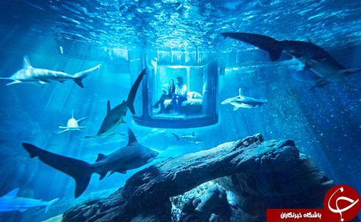 شگفت انگیزترین اتاق خواب دنیا+تصاویر