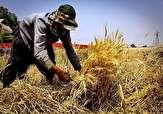 باشگاه خبرنگاران - ثبات نرخ خرید تضمینی در آینده تولید گندم تأثیرگذار است