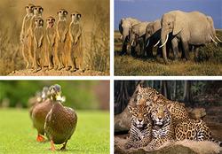 حیواناتی که برخلاف ظاهرشان بسیار خطرناک هستند+تصاویر
