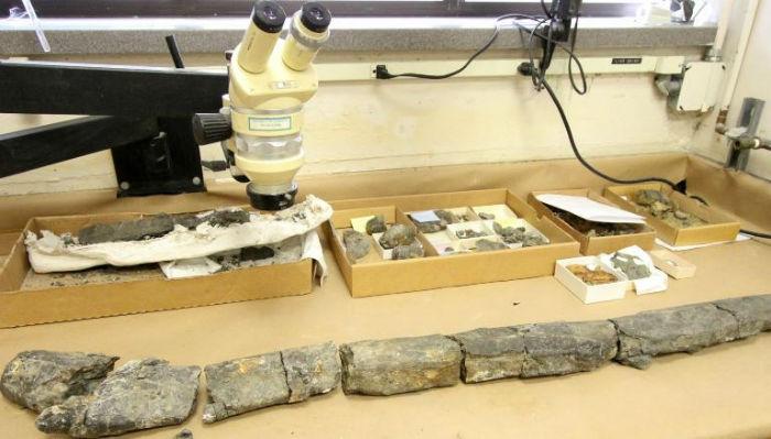 کشف جمجمه یک گاو در دوران عصر حجر