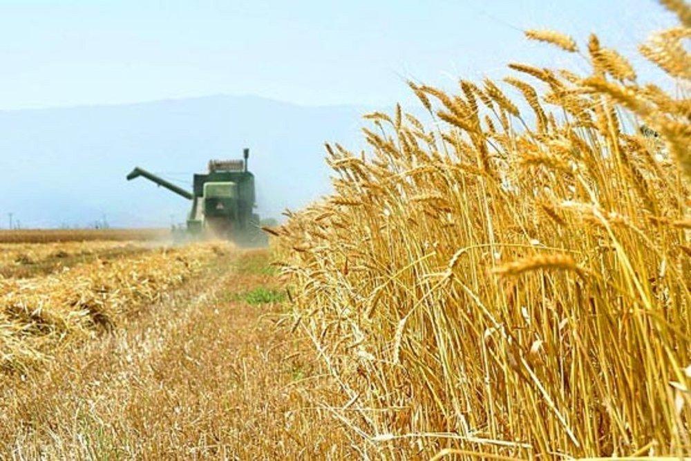 روسیه ابرقدرت کشاورزی جهان باقی خواهد ماند