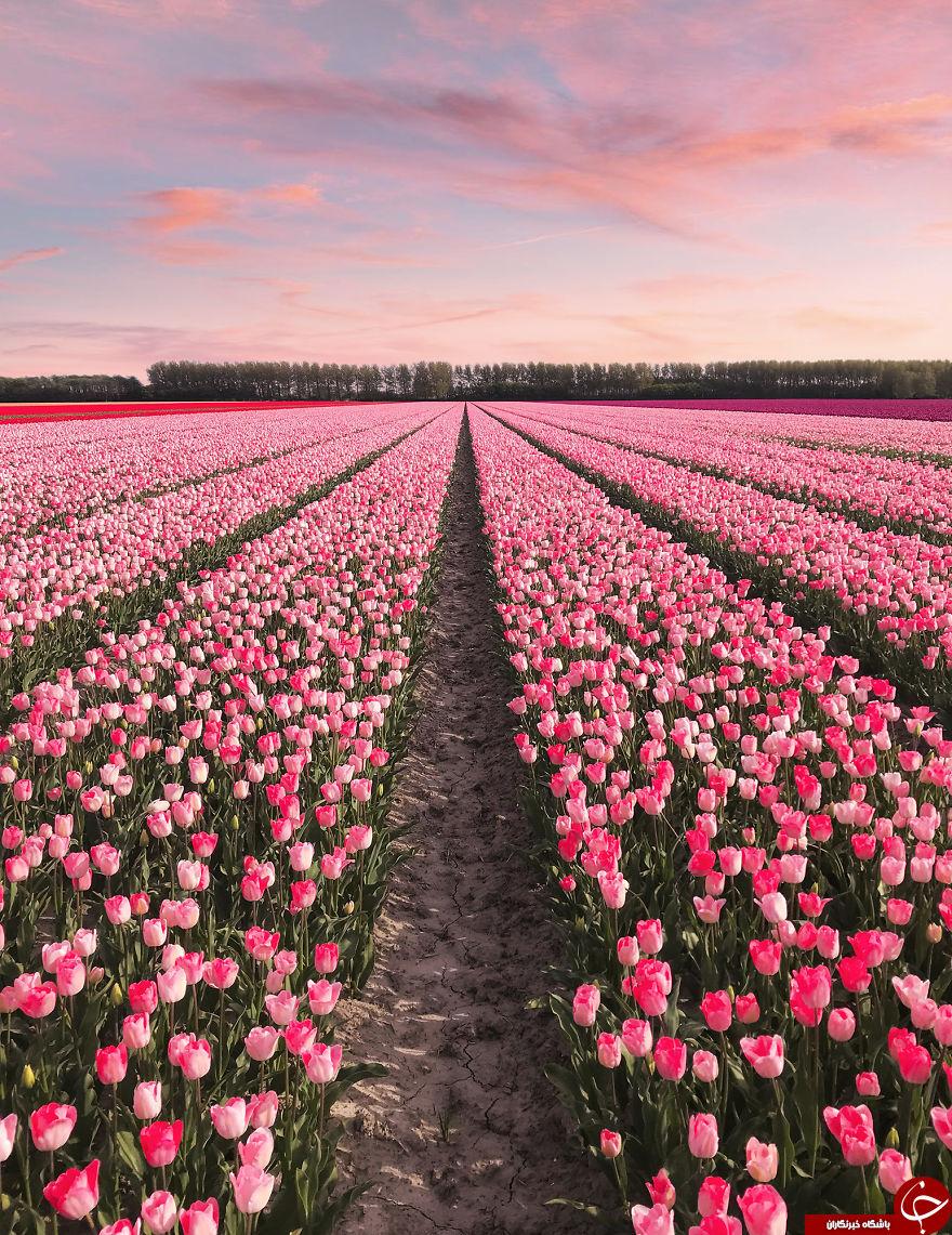 عکسهای دیدنی کشور هلند
