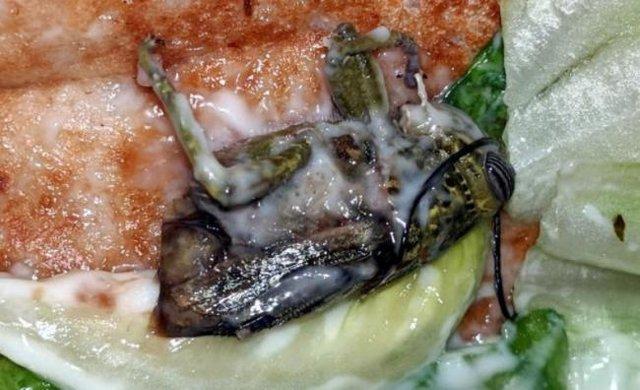 جریمه برای فست فود فروشی مشهور برای ملخ در ساندویچ مشتری عکس
