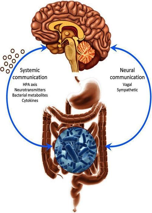 کشف تاثیر شگفت انگیز  غذا بر اعصاب شما
